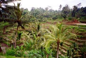 Bali - 7